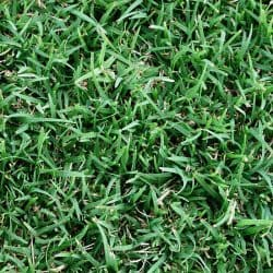 GREENLEES PARK COUCH-TURF SUPPLIER