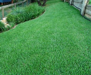 Empire Zoysia Grass