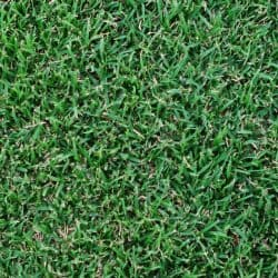 Windsor Green Couch Turf