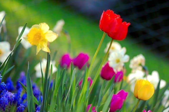 Colorful_spring_garden_lo