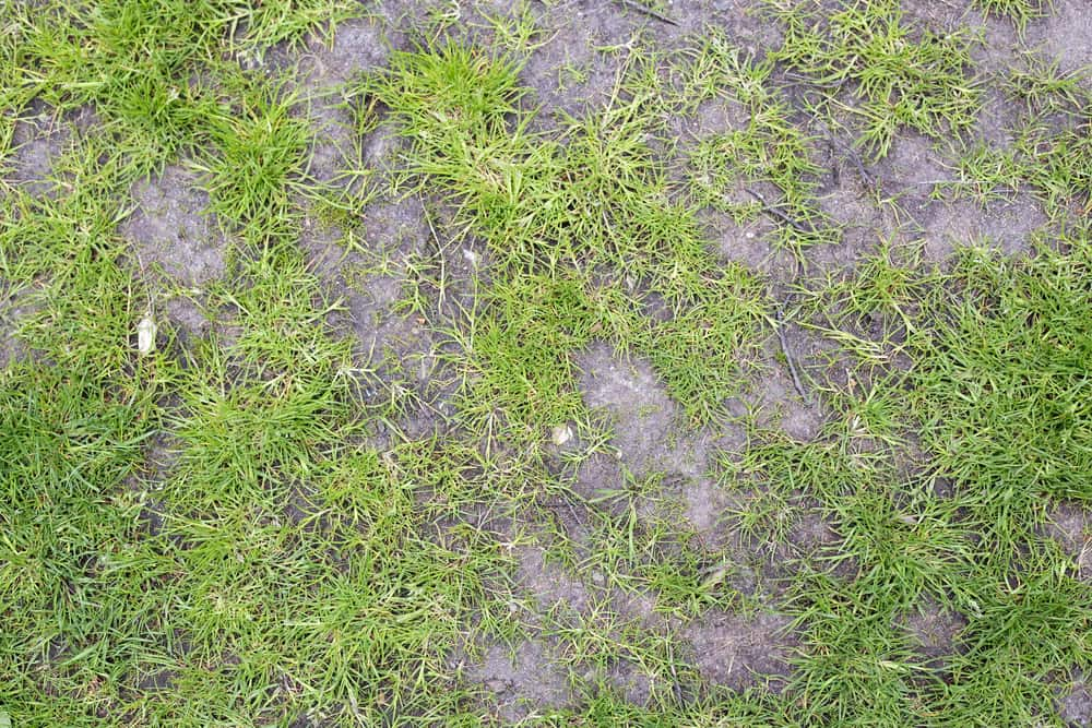 Grass lawn with bald patches